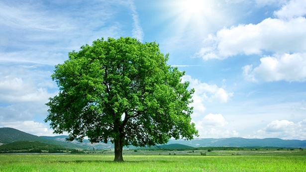 story-seed-earth-tree-1