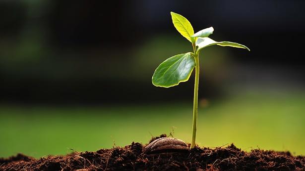 Opowieść 1. Ziarno, ziemia, drzewo, słońce, śpiewające ptaki i człowiek