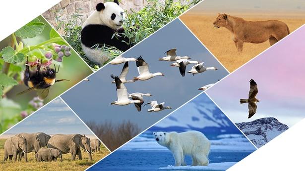 Bóg wyznaczył granice także dla różnych ptaków, zwierząt lądowych, ryb, owadów i wszystkich roślin
